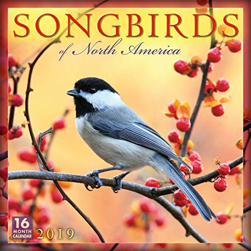 Songbirds of North America - 2019 Wall Calendar