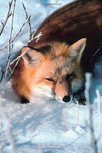 Journal Red Fox Lies In Snow: (Notebook, Diary, Blank Book) (Seasonal Winter Wildlife Photo Journals Notebooks Diaries) ebook