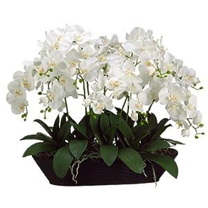 """Silk Flower Arrangements 27"""" Hx30 W Phalaenopsis Orchid Silk Flower Arrangement -Cream"""