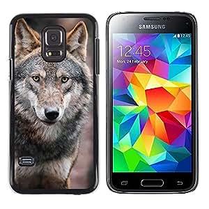 Stuss Case / Funda Carcasa protectora - Wolf Wild Dog Brown Forest Fairytale Eyes - Samsung Galaxy S5 Mini, SM-G800, NOT S5 REGULAR!