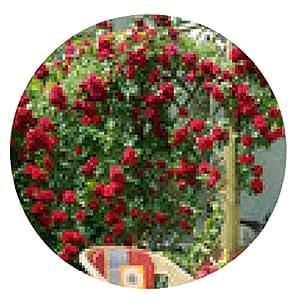 alfombrilla de ratón Hermosa rosa de escalada en la terraza - ronda - 20cm