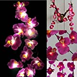 GaanZaLive36 Magical Garden Handmade 20 Romantic Hawaiian Plumeria Frangipani Natural silk Flower Fairy String Lights Patio Wedding Party Vanity Kid Wall Lamp Floral Home Decor 3m (Orchid, Purple)