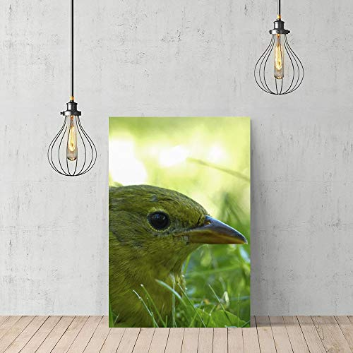 rfy9u7 Wooden Framed Print Canvas Wall Art Square Baltimore Oriole Little Bird Grass Animal Canvas Print Bedroom Bathroom Decoration ()