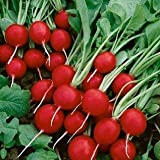 David's Garden Seeds Radish Cherry Belle SL037A (Red) 200 Heirloom Seeds
