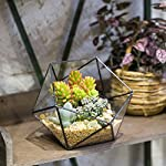 NCYP-Geometric-Glass-Terrarium-Half-Ball-Pentagon-Planter-Indoor-Balcony-Window-Sill-Succulent-Plant-Cacti-Fern-Flower-Pot-Container-Tabletop-Bowl-Shape-Vase-Bonsai-Miniature-Centerpiece