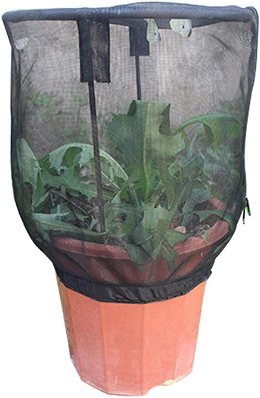 Beiyoule Red de alimentación de insectos para jardín o terrario, cubierta para jaula de mariposas, hábitat: Amazon.es: Hogar