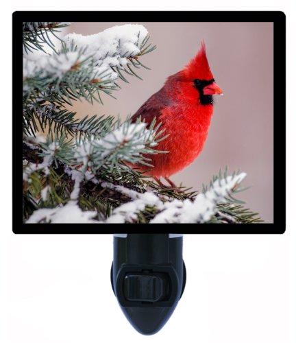 - Night Light - Winter Cardinal - Bird