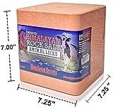 22 LB Compressed Himalayan Salt Lick for