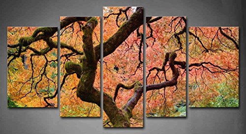 Japanese Maple Tree With Pink Leaf In Fall Painting Pictures Print On Canvas Botanical The Picture For Home Modern Decoration piece (Stretched By Wooden Frame,Ready To Hang) ()