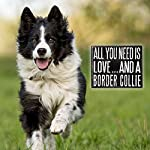 JennyGems - All You Need is Love and a Border Collie - Real Wood Stand Up Box Sign - Border Collie Gift Series - Border Collie Moms and Owners - Shelf Knick Knacks 10