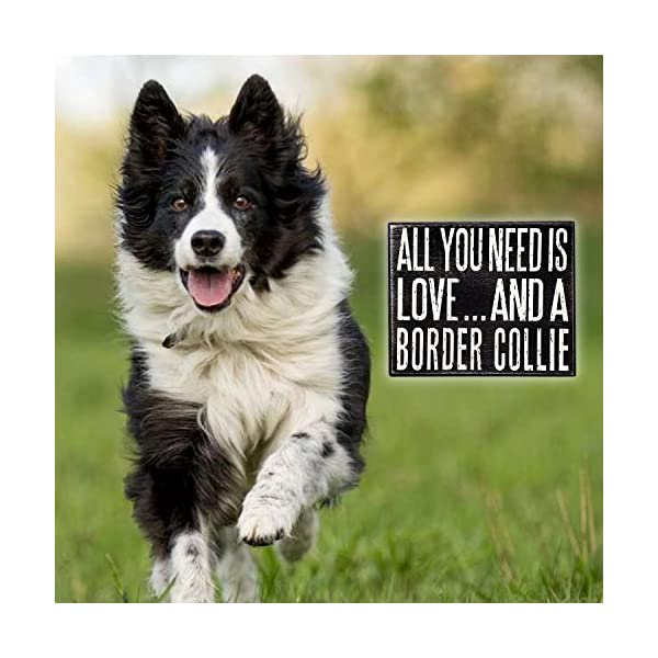 JennyGems - All You Need is Love and a Border Collie - Real Wood Stand Up Box Sign - Border Collie Gift Series - Border Collie Moms and Owners - Shelf Knick Knacks 5