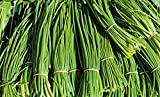 Garlic Chive Herb Seed NoGMO Plant Grow Best Prices 2C (300 Seeds)