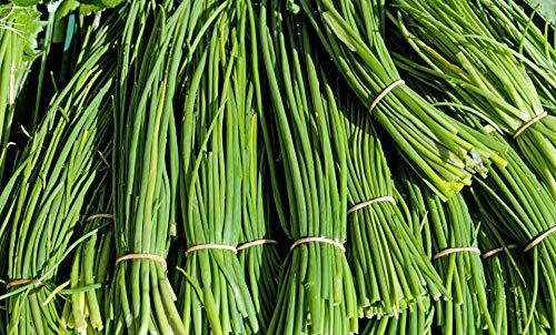 Garlic Chive Herb Seed NoGMO Plant Grow Best Prices 2C (300 Seeds) (Best Price Garden Seeds)