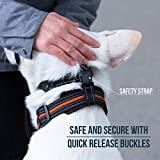 GoodBoy Dog Head Halter with Safety Strap - Stops