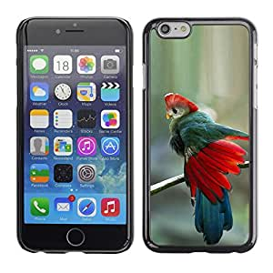 A-type Arte & diseño plástico duro Fundas Cover Cubre Hard Case Cover para Apple (5.5 inches!!!) iPhone 6+ Plus / 6S+ Plus (Teal Red Feathers Blue Tropical Bird)
