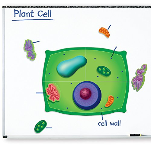 Magnetic Resources Foam Learning (Learning Resources Giant Magnetic Plant Cell)