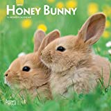 Honey Bunny 2019 7 x 7 Inch Monthly Mini Wall Calendar, Domestic Small Cute Animals (Multilingual Edition)
