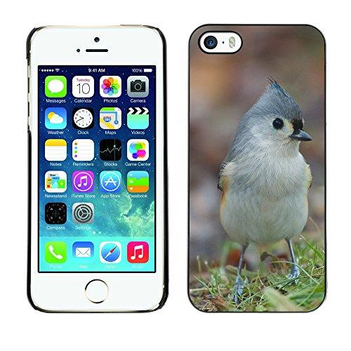 Premio Sottile Slim Cassa Custodia Case Cover Shell // F00007432 oiseau // Apple iPhone 5 5S 5G