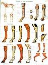 Planche numéro 2 : tendons de cheval par Ffe