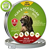 New 2018 Dog Flea Collar 8 Months Protection Hypoallergenic Waterproof Tick Collar for Dogs - Adjustable Flea and Tick Prevention for Dogs - Natural Dog Flea and Tick Control