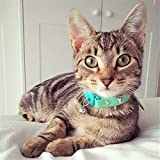 Kittyrama Meadow Cat Collar. Award Winning. As Seen in British Vogue. Other Styles and Colors Available. for Adult Cats