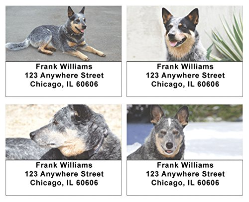 Dog Personalized Address Labels (Grey Australian Cattle Dogs Address Labels)