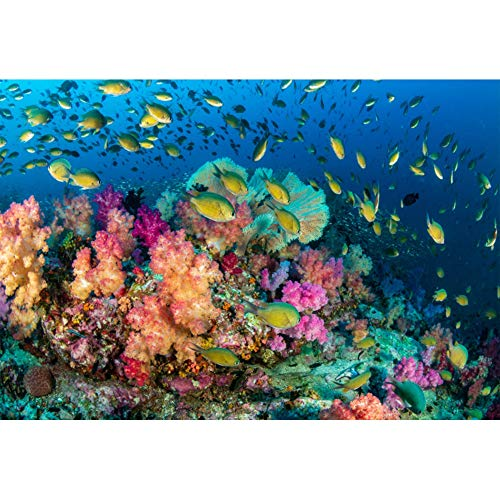 Leowefowa Vinyl 10x7ft Underwater World Backdrop Aquarium Backgrouds for Photography Colorful Coral Reef Tropical Fishes Fish Tank Backgroud Children Audlt Summer Holiday Birthday -