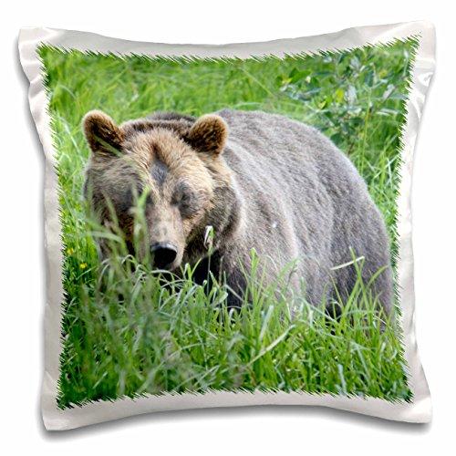 3dRose Albom Design Animals - Brown Bear in Alaska Photo by