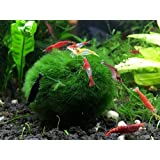 3 Giant Marimo Moss Balls + 1 Free - Very High Quality - 2 to 2.5 Inches, 8 to 15 Years Old! - Great for Live Fish, Shrimp, and Snails! by Aquatic Arts by Aquatic ArtsTM (formerly InvertObsessionTM)