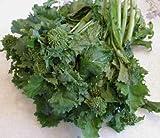 Heirloom BROCCOLI RAAB Spring Rapini Rabe ORGANIC❋2000 SEEDS❋Asparago❋OP❋Non GMO