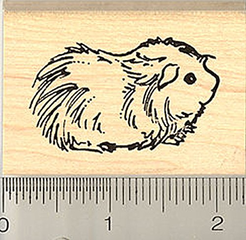 Cute Long haired Guinea Pig Rubber Stamp