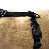 Kurgo Dog Harness | Pet Walking Harness | Medium
