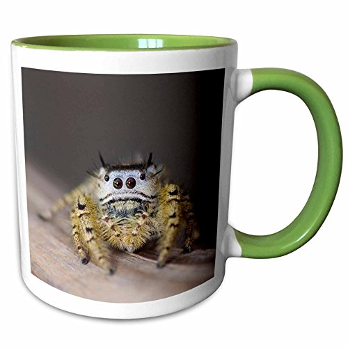 3dRose Danita Delimont - Spiders - Jumping Spider, New Braunfels, Hill Country Texas - NA02 RNU0169 - Rolf Nussbaumer - 11oz Two-Tone Green Mug - Outlet Braunfels New