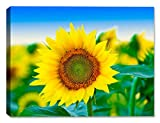 Sunflowers in Field of Flowers-Outdoor Wall Art - Weatherprint - Weatherproof Art for Indoor or Outdoor Canvas Art