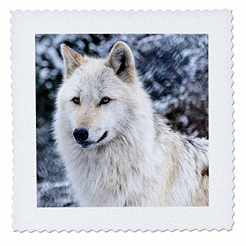 (3dRose Rocky Mountain Gray Wolf - Quilt Square, 10 by 10-Inch (qs_173719_1))
