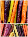 Homegrown Carrot Seeds, 1000 Seeds, Rainbow Supreme Carrot Mixture No Gmo