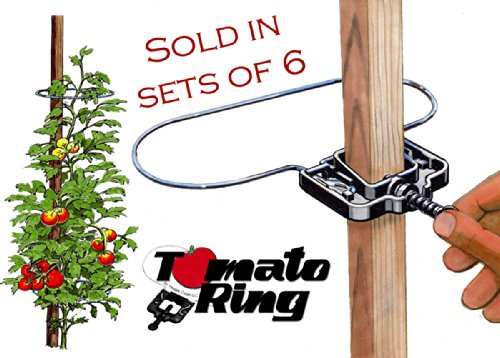 Tomato Ring - Tomato Cage - Plant support/Tomato support - 6 Pack by Tomato Ring
