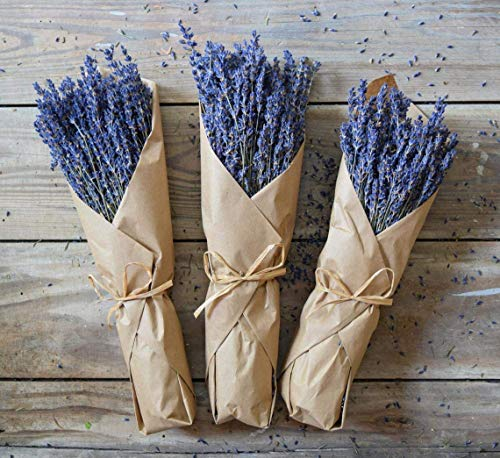 (Dried Lavender Bundles Freshly harvested Real Natural Lavender Bunch Royal Velvet Lavender Bundles for DIY Home Office Party Wedding Decor, 10