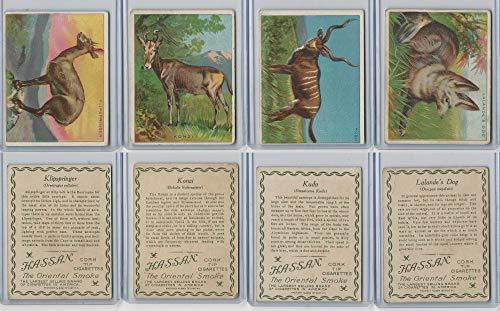 T29 Hassan, Animals, 1911, Klipspringer, Konzi, Kudu, Lalande's Dog