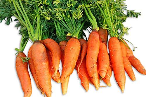 Little Finger Carrot 200 Seeds #8135 Item ()