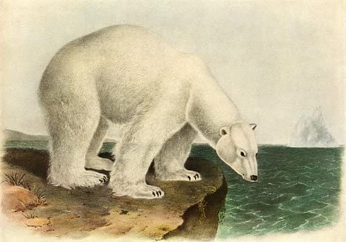 Amazon Com John James Audubon Polar Bear Beautiful Art Print Posters Prints