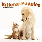 Kittens & Puppies 2018 12 x 12 Inch Monthly Square Wall Calendar with Foil Stamped Cover by Plato, Animals Cute Kittens Puppies
