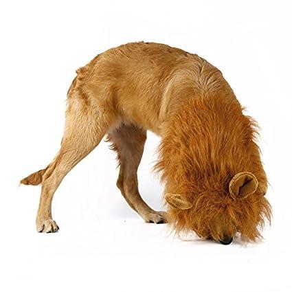 Disfraz de perro león pelucas de pelo humano bufanda ropa para fiesta Halloween Festival
