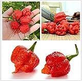The Best Seller 100seeds/bag Carolina Reaper, hot chili seeds...