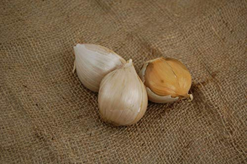 Elephant Garlic Cloves - 3 Pack - Ready to Plant ()