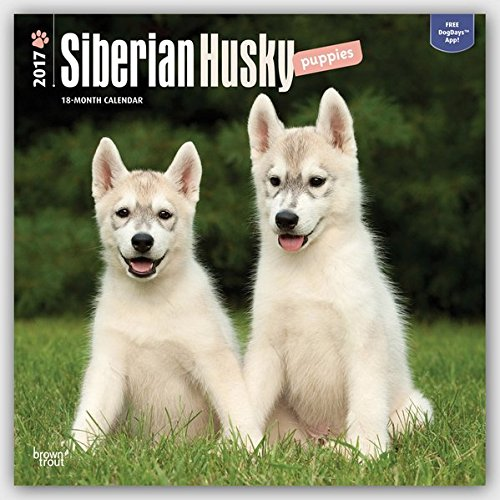 Siberian Husky Puppies - Husky-Welpen 2017-18-Monatskalender mit freier DogDays-App: Original BrownTrout-Kalender [Mehrsprachig] [Kalender] (Wall-Kalender)