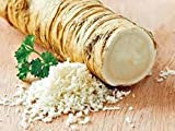 Best Horseradish Roots - Horseradish Root, Big Top Western, 8 ounces Review