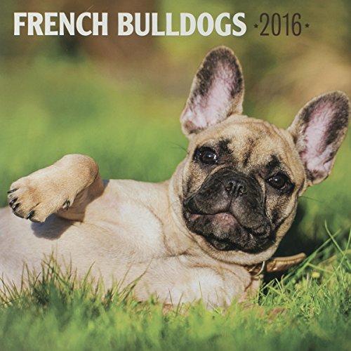 "DaySpring 12"" x 12"" 2016 12-Month Wall Calendar, French Bulldogs (74257)"