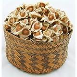 100 Moringa Oleifera seeds