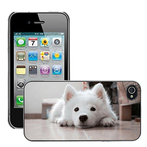 Bild Hart Handy Schwarz Schutz Case Cover Schale Etui // M00134723 Hundewelpen Weiß Haustiere // Apple iPhone 4 4S 4G